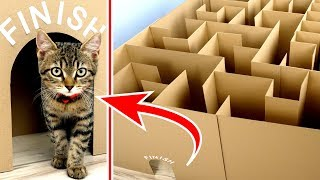 Video GIANT Maze Labyrinth for Cat Kittens. Can they EXIT? MP3, 3GP, MP4, WEBM, AVI, FLV September 2018