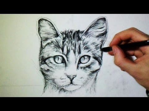 Comment dessiner un chat youtube - Comment dessiner un chat facilement ...