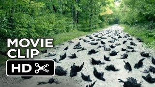 Alien Abduction Movie Clip   Birds  2014    Found Footage Sci Fi Horror Movie Hd