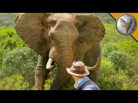 Man vs. Elephant!