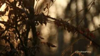 Video ERNESTO CORTAZAR - The Forest' s Awakening MP3, 3GP, MP4, WEBM, AVI, FLV Agustus 2018