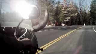 8. The Sidecar - Ural Motorcycles Spec Commercial