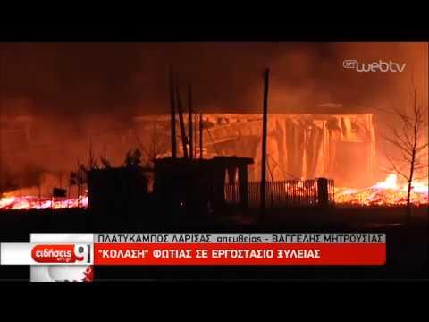 «Κόλαση» φωτιάς σε εργοστάσιο ξυλείας στον Πλατύκαμπο | 27/02/19 | ΕΡΤ