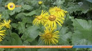 borçka karagol tabiat parkı ve çevre doğası artvin  4k uhd