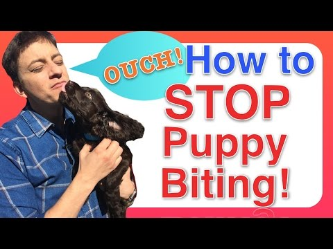 how to get your puppy from biting
