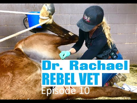 Dr. Rachael Rebel Vet Episode 10 'I'll Take Those' Horse Castration