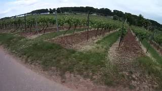 Nierstein Germany  City pictures : Eurovelo 15 - Rhine Cycle Route - Day 15 - Part 1 - Nierstein, Germany