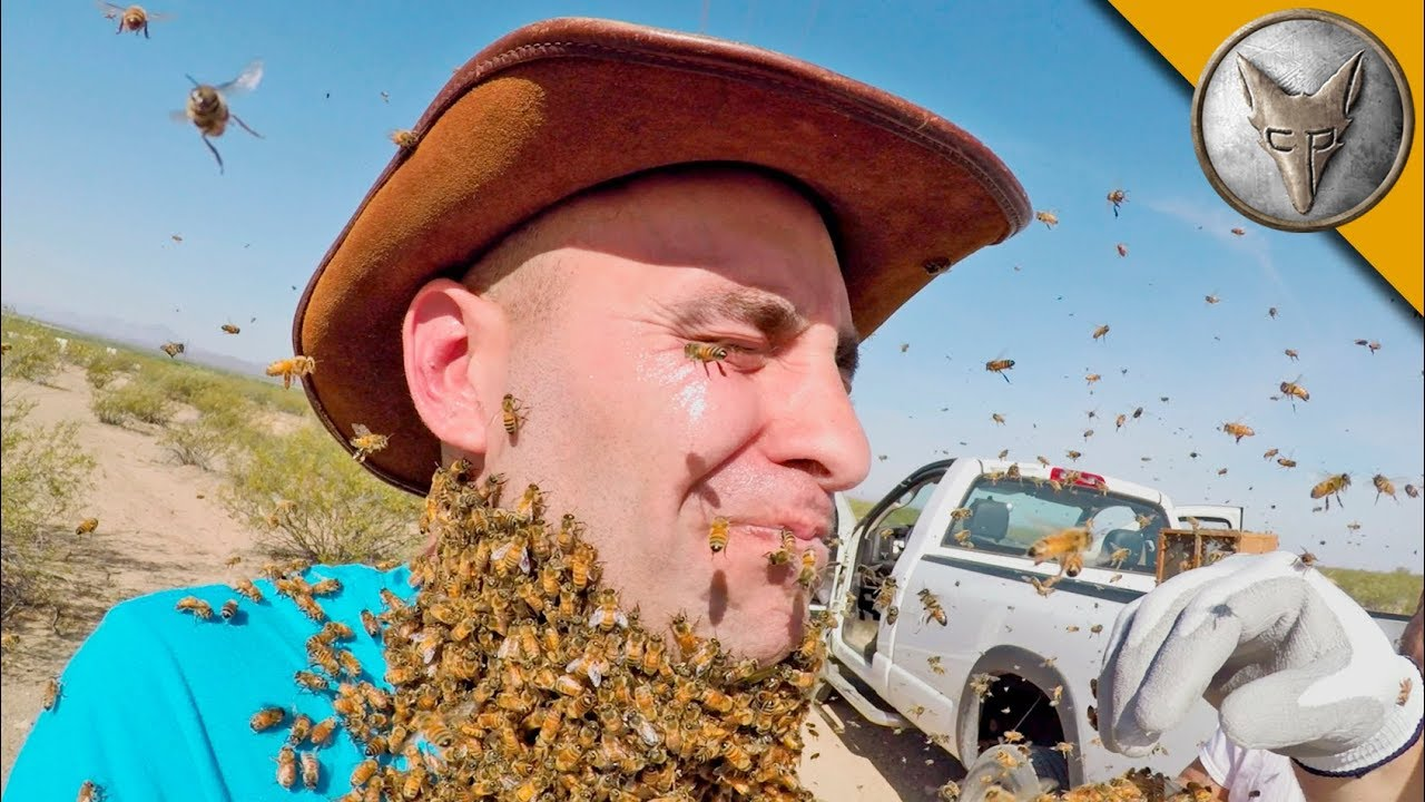 Picture of Bee Beard Absent Erroneous!