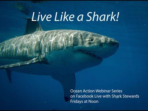 Live Like a Shark Ep 1 4_10_ 2020 What is a shark?