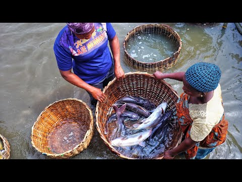 WHAT N11,000 WILL BUY AT EPE FISH MARKET \OLUWO MARKET | MARKET RUNS