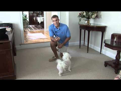 Dog Training – Stay Command