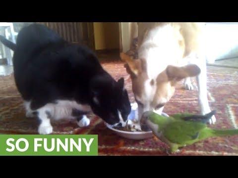 cane-gatto-e-pappagallo-dividono-il-pranzo