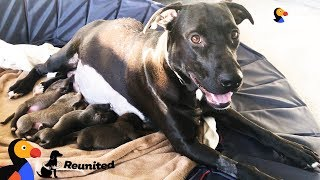 Video Mother Dog Reunited With Her Puppies All Grown Up | The Dodo Reunited MP3, 3GP, MP4, WEBM, AVI, FLV Juli 2018
