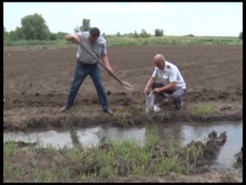 Правила орошения почв, вред дикого полива