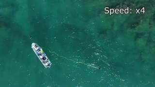 東大、自律海中ロボ開発 深度300m対応・漁船運用可能