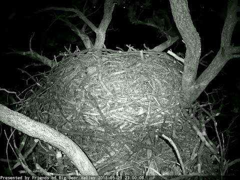 Live-Cam: Vögel - Bald Eagle / Weißkopfseeadler - Hor ...