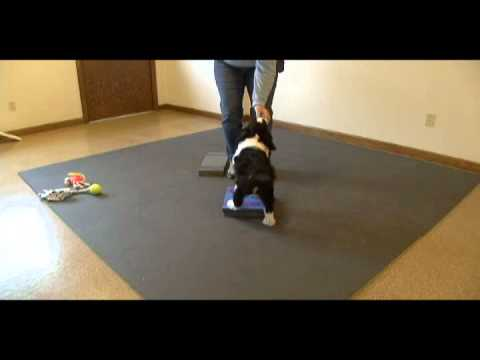 Platform Training for Dog Sports
