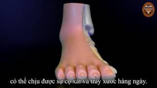 Cấu tạo và chức năng bàn chân