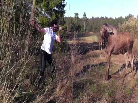 Man Vs. Moose