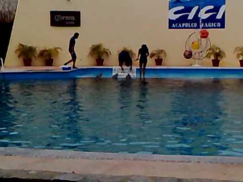 El cici acapulco magico - Show de Delfines 1 de 3