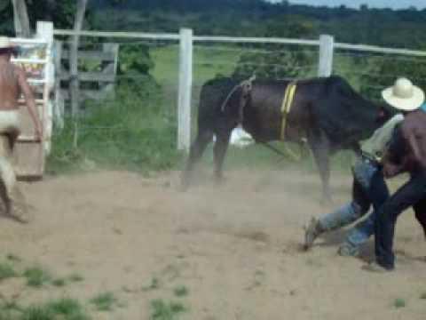 Rodeio em touros Cia Sertãozinho-Formiga MG (37)99434417