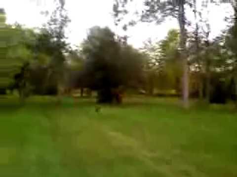 Deer vs. Chihuahua