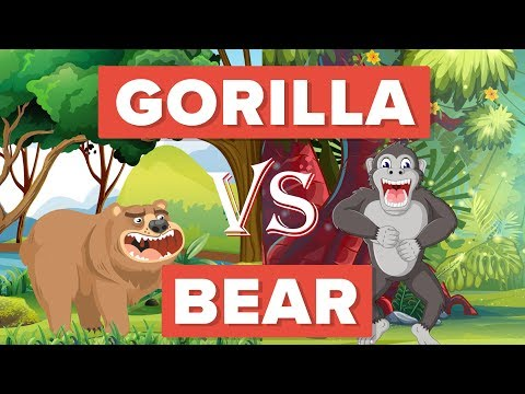 Gorilla Vs Polar Bear Who Would Win A Fight - Apk Downloader