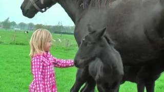 Ten filmik zapiera dech w piersiach – Klacz zszokowała swoich właścicieli urodziła bliźniaki.