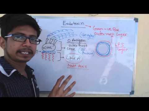 Endotoxin | lipopolysaccharide or LPS