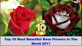 Nonton Top 10 Most Beautiful Rose Flowers In The World 2017 Film Subtitle Indonesia Streaming Movie Download
