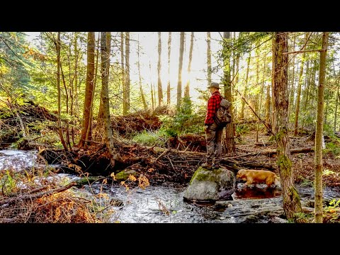 A Walk in the Woods   Thanksgiving at the Outpost