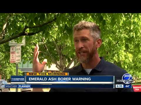 Emerald Ash Borer warning
