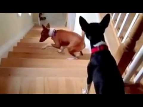 il-cane-anticonformista-215