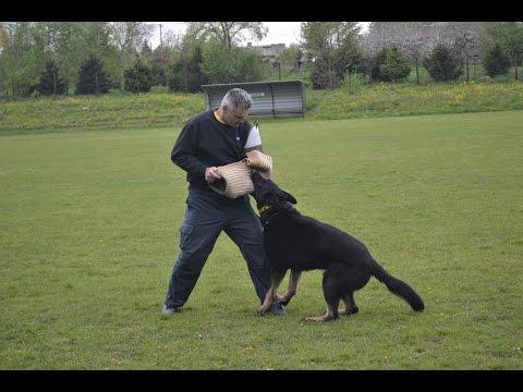 Rychvald - Ukázka z výcviků služebních psů