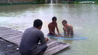 Topcats Fishing - 2nd Asian Redtail Catfish Of The Day - Koh Samui - Thailand