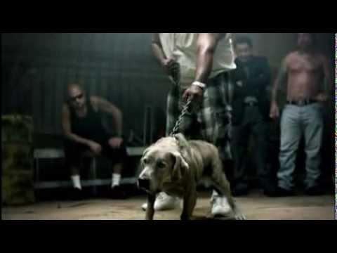 perro de pelea cordobes