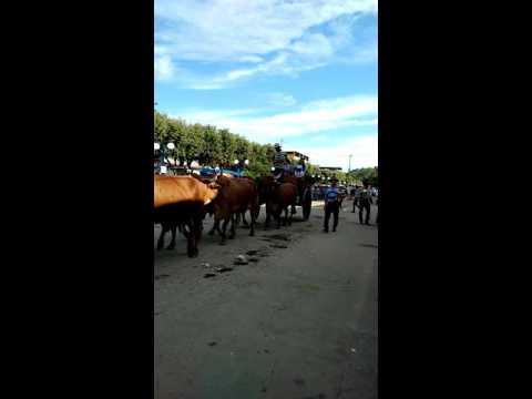 festa de carro de boi em Raposo 2015