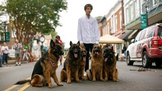 Dog Whisperer Can Walk Pack Of German Shepherds Without Leash by Barcroft Animals