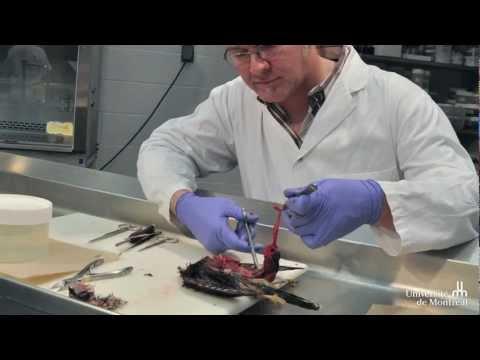 Workshops über die Sicherheit von Fleisch für Cree Jäger