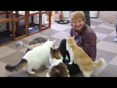 Ed plays 'Thinking Out Loud' to cats: x Tour Diary (Part 2)