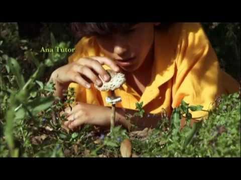 En Tu Ausencia (2008) (видео)