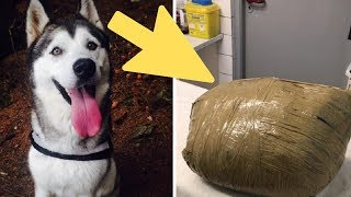 Woman Discovers Her Dead Dog Wrapped in Tape by Kennel by Did You Know Animals?