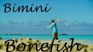Bimini Bahamas  city images : S1/ Ep 5 Bimini, Bahamas, bonefish, sharks, stingrays, and the Sapona wreck
