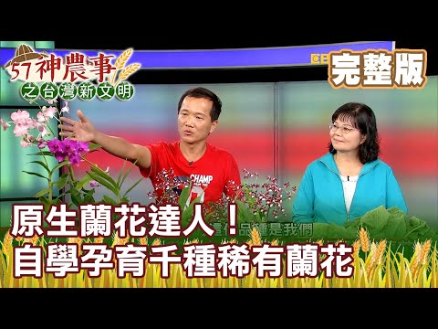 原生蘭花達人!自學孕育千種稀有蘭花《57神農事》完整版 胡忠信 黃鈺惠