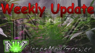Weekly Update 2/16/2017 by  NVClosetMedGrower