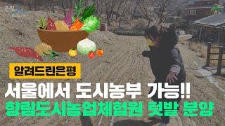 [은평구] 서울에서 도시농부가 가능하다구!!! / 향림도시농업체험원 텃밭 분양 / 리틀포레스트 in 은평 썸네일