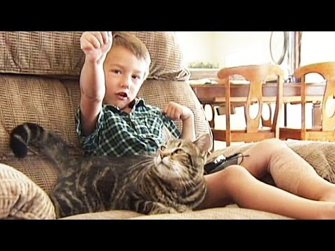 UPDATE on the cat that that saved the little boy!