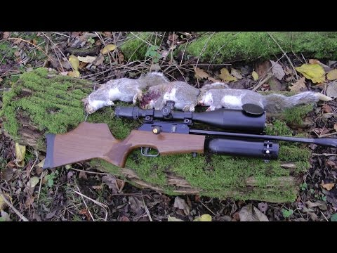Pest Control with Air Rifles - Squirrel Shooting - My Rapid is Back!