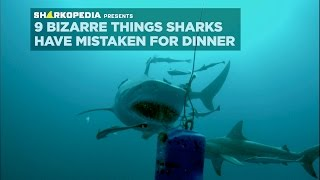 SharkWeek  Starts Sun Jul 23 Ocean dumping has caused an underwater epidemic, leaving sharks to snack on dangerous and strange objects. Full Episodes ...