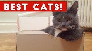 Funny Cat Videos Compilation December 2016   Funny Pet Videos